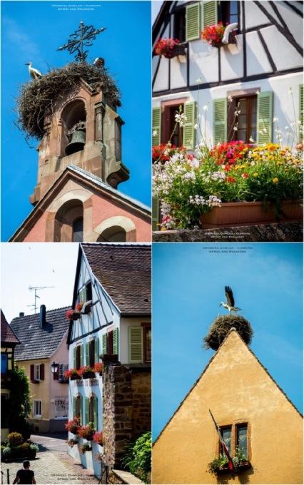 Eguisheim6