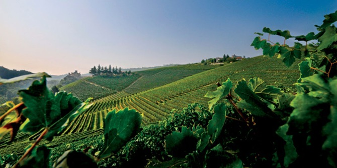 The Cannubi Cru in Langhe, Piedmont of Damilano Barolo