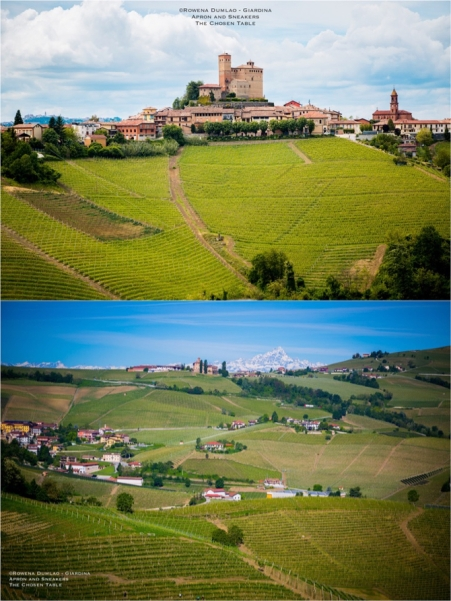 Expressions of Nebbiolo in Piedmont 53
