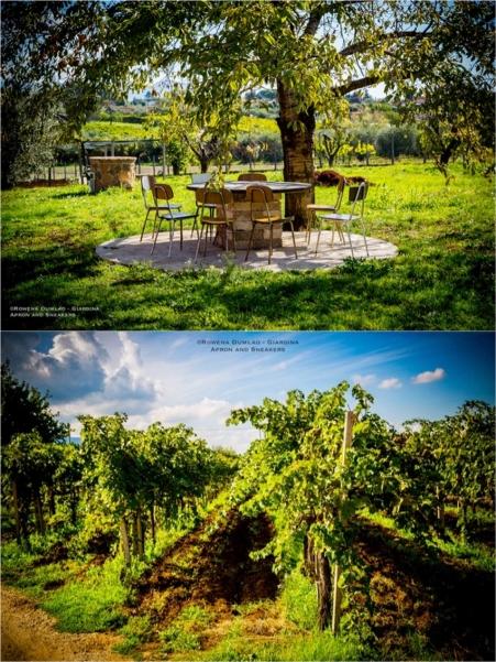 Cantina Del Tufaio Sauvignon Blanc 8